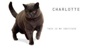 Charlotte gato