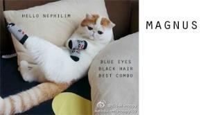 Magnus gato